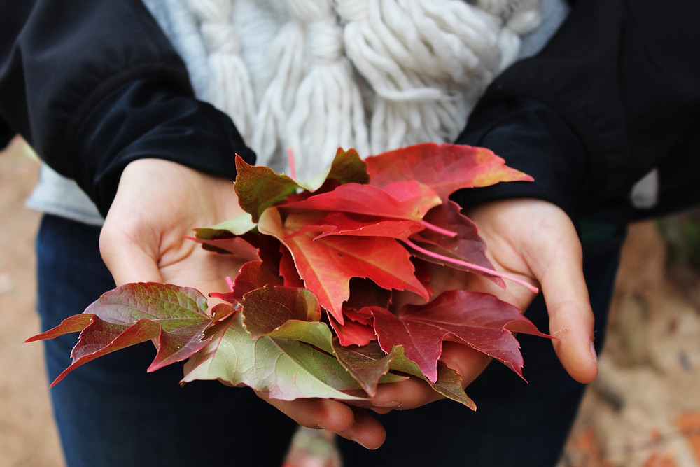 A woman holds autumn leaves in her hands, and is wearing a big knit comfy scarf.