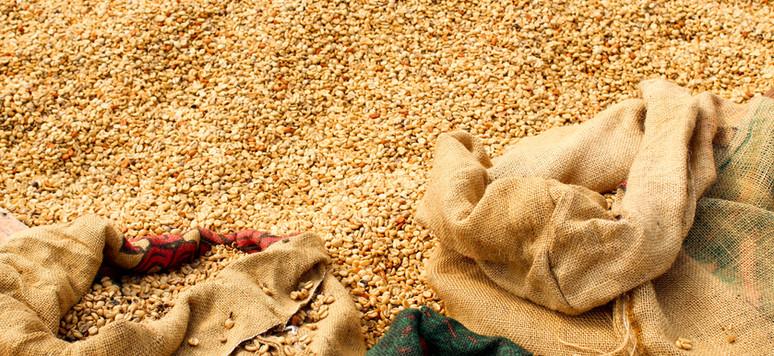 Coffee Supply Chain