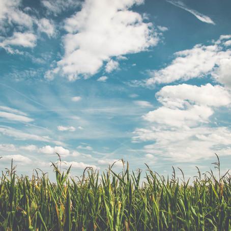 In dying fields