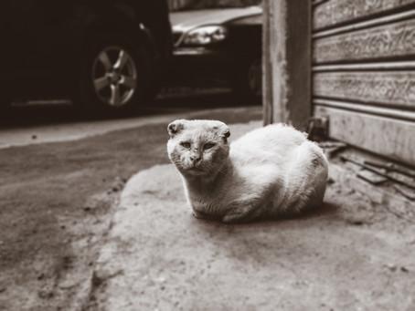 Öykü- Öznur Unat- Bir Kedi Bir Kapıcı ve İnsanlık Halleri