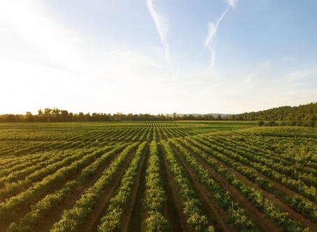 Referente  agroindustrial