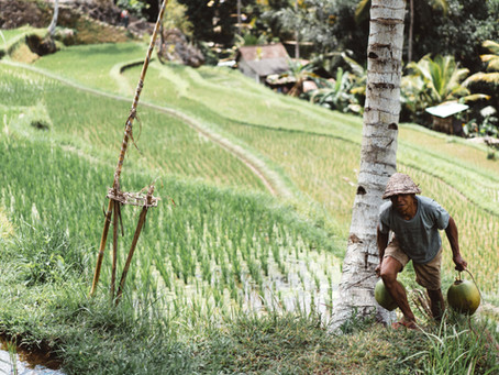 למה אתם צריכים ללכת כמו חקלאים