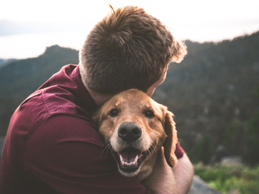 Who Keeps the Dog, in a Divorce?
