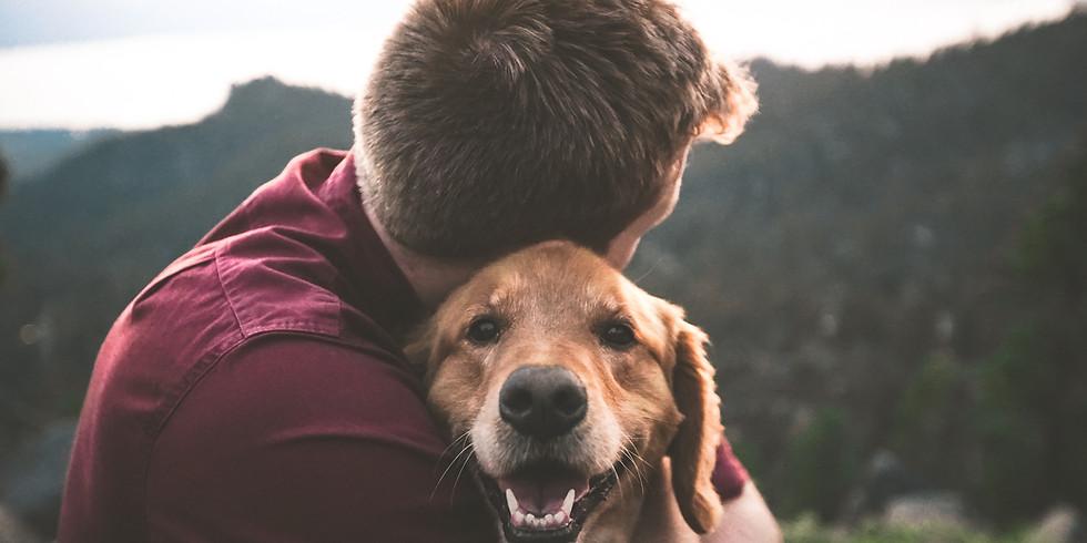 Introducción a las intervenciones asistidas por animal y sus implicaciones en diferentes escenarios de salud