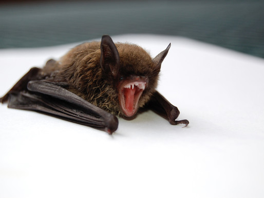 Why Bat Houses are the New Bird Houses