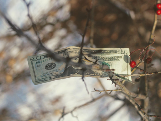 Cash Crops You Can Grow in New England