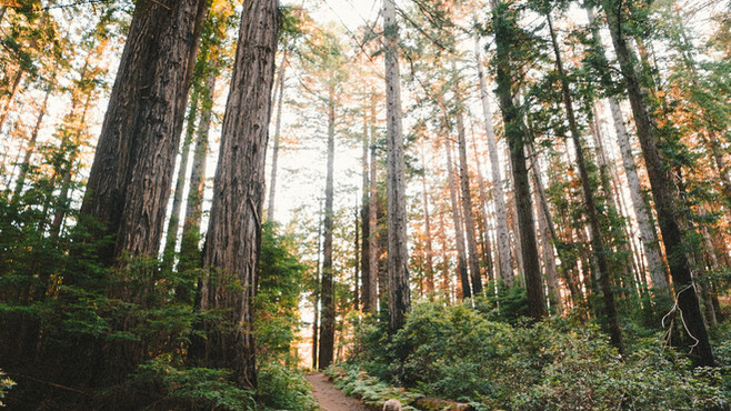 Forest Bathing for Mindfulness & Well-Being