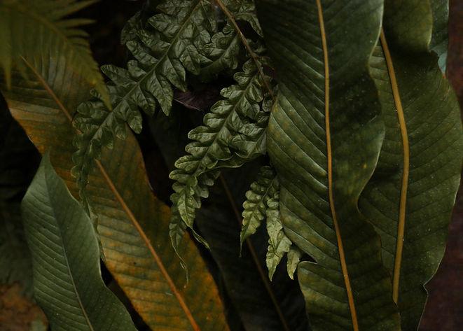 Konsultacijos ir patarimai palmių, kitų augalų auginimui bei priežiūrai