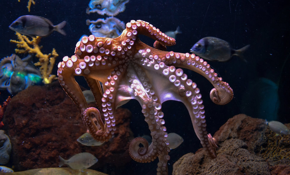 SEA Show: Octopus Day