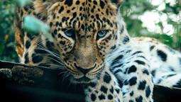 2nd World Jaguar Day!