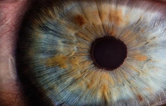Visión de la cornea en un microscopio ocular