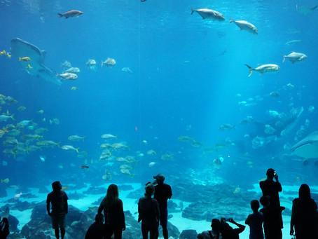 Visiting The Georgia Aquarium During COVID-19