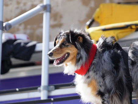 Misconceptions of Dog Socialization