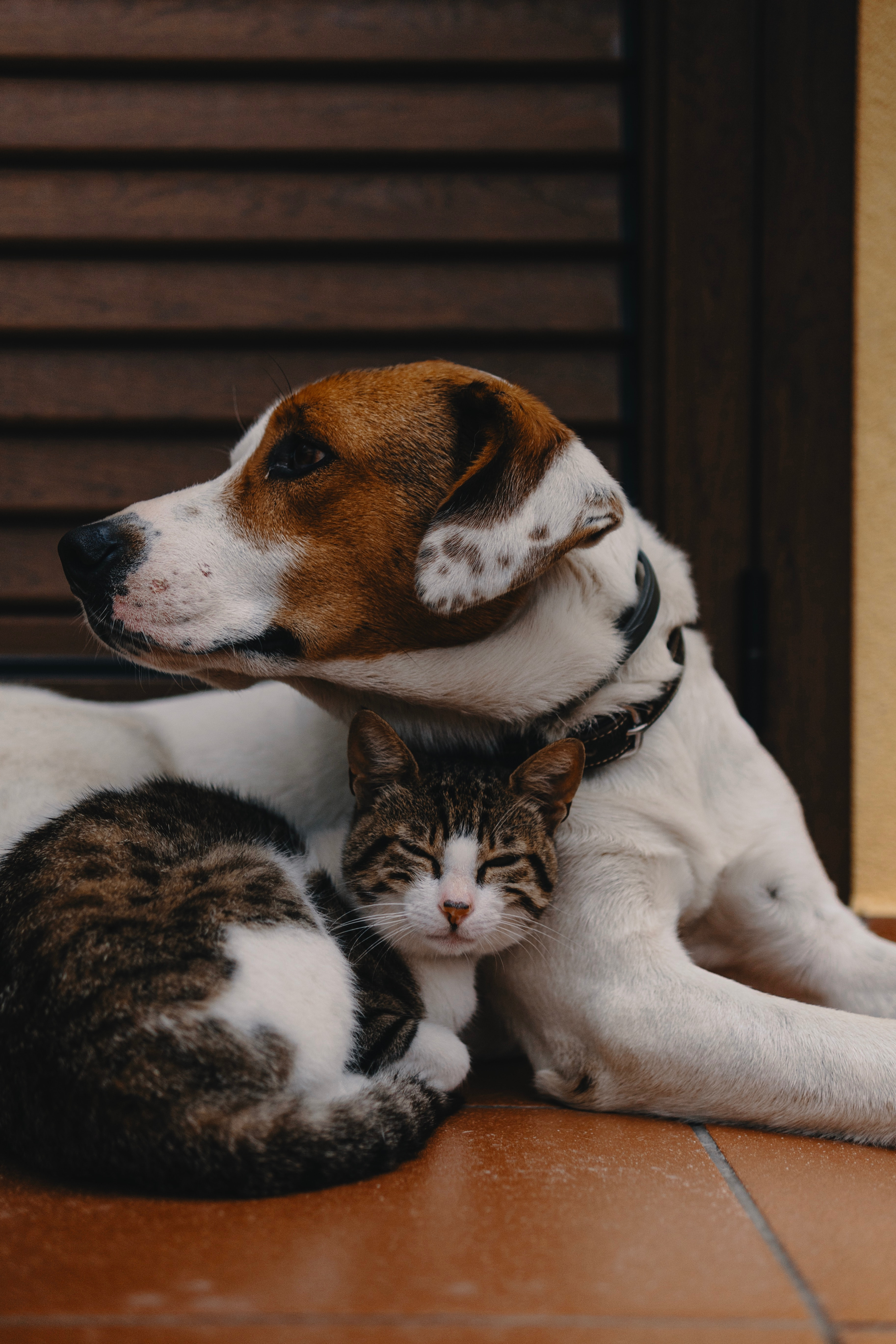 Animal Communication & Energy Work