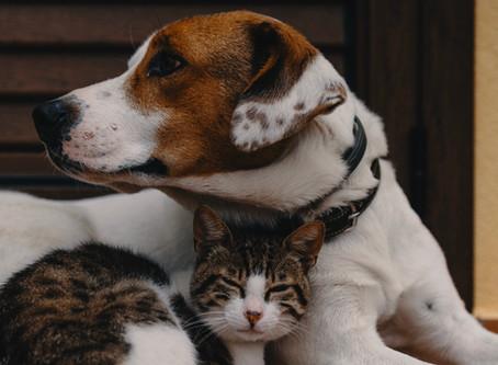 Descubre los beneficios para tu salud cuando tienes mascotas