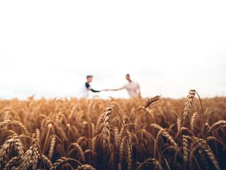 Harvest... be ready!