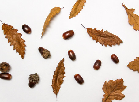 Activities for Autumn