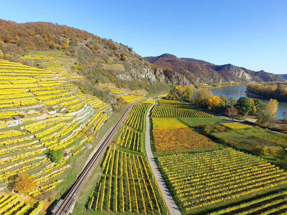 terraced vineyards in the UNESCO-listed Wachau valley in Austria