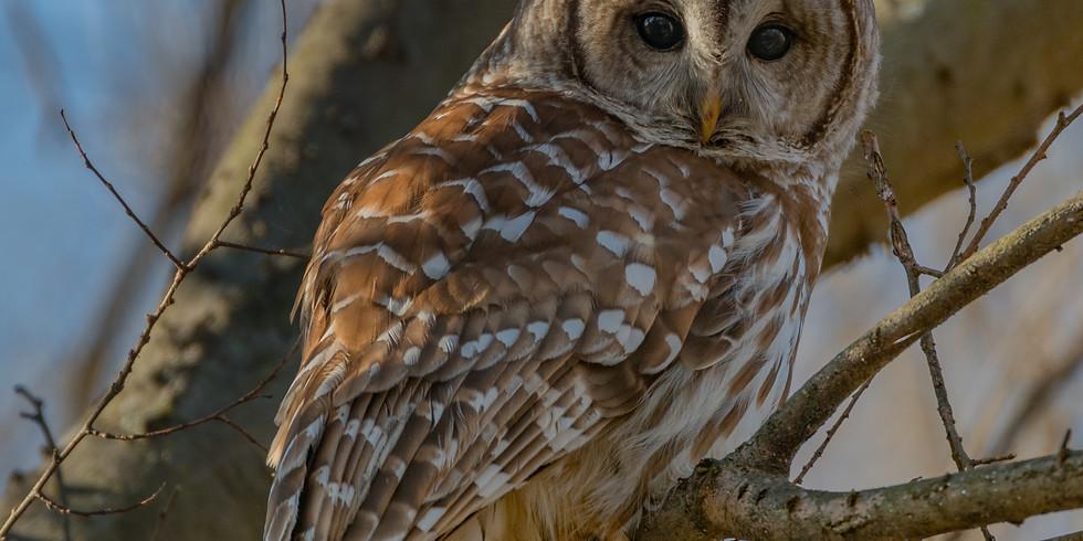 Ijams Owl Prowl