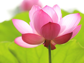 The Seven Principles of Spiritualism
