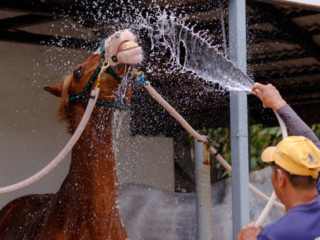 Washing Your Horse, and Why It's Important
