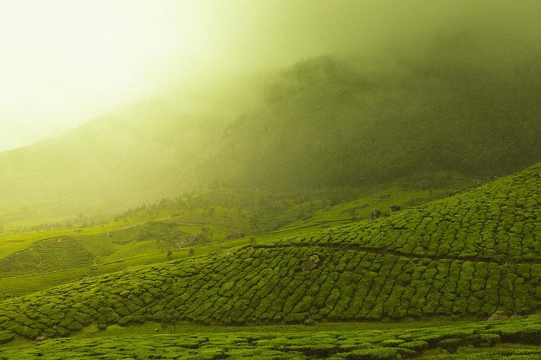 Image by Vivek Kumar