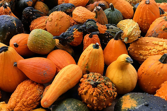 Squash, winter, all varieties, raw