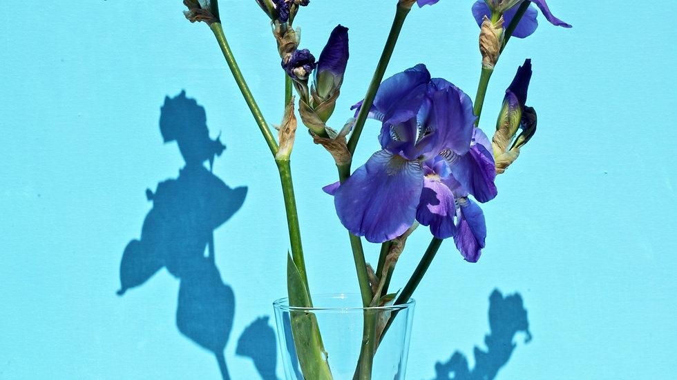 Letterbox Iris Bouquet