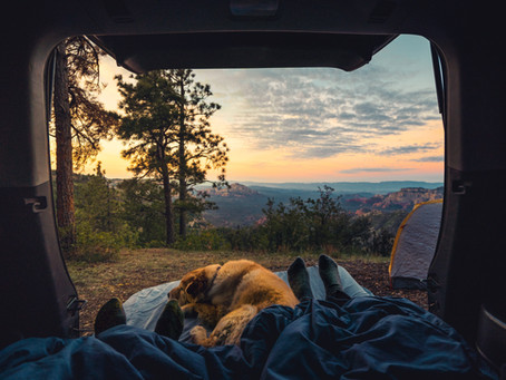 We Camped with 2 Dogs for the First Time...This is How it Went
