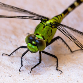 To Me All Dragonflies Are Emerald Green by Keely O'Shaughnessy