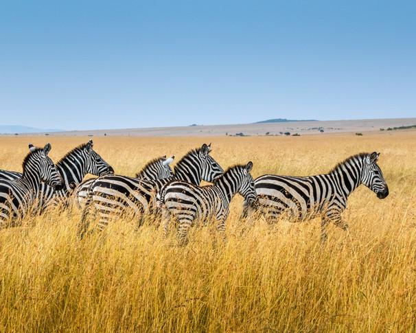 DE KENIA A TANZANIA