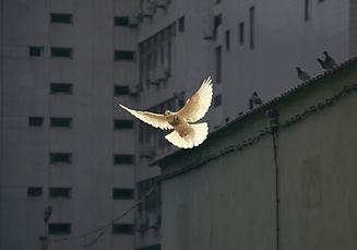 Image by Sunguk Kim