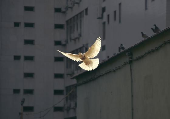 """Sermon: """"Peace and Forgiveness"""""""