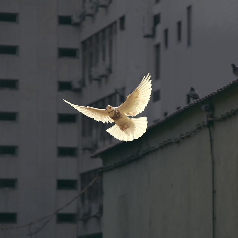 UN Peace Day Discussion club