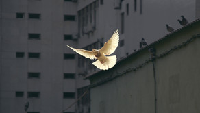 A paz que excede todo entendimento