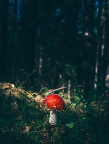 Image by Geran de Klerk