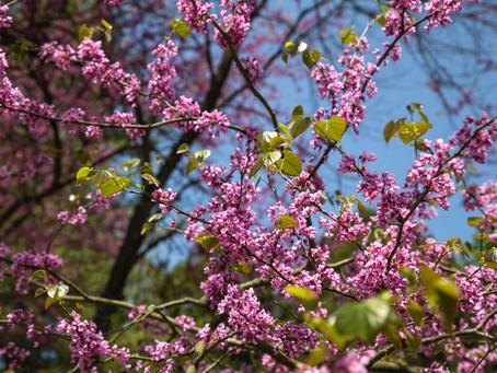 De kracht van de lente