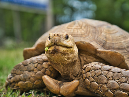 30. Be more tortoise, and why it matters