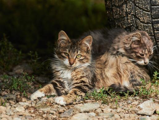 Une hausse du nombre de chats errants dans l'arrondissement Mercier-Hochelaga-Maisonneuve