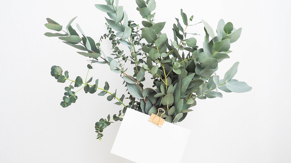 Ten Fresh Cut Eucalyptus Stems