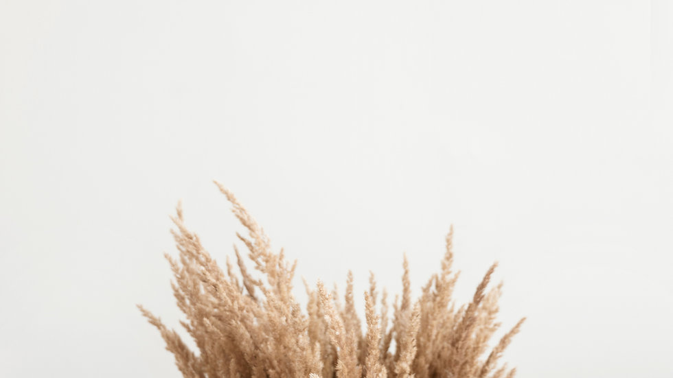 5 Stems of Pampas Grass