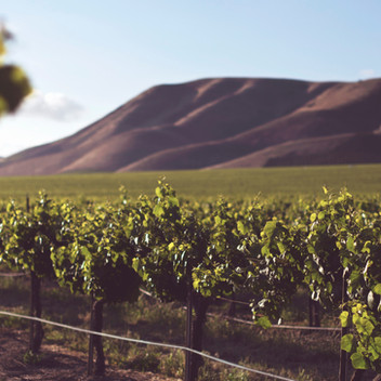 Eradus Wines