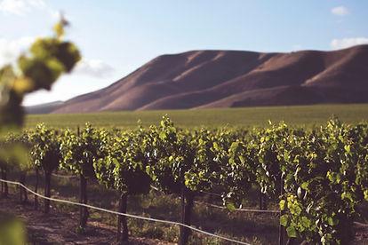 Vanorel - Vins de bordeaux