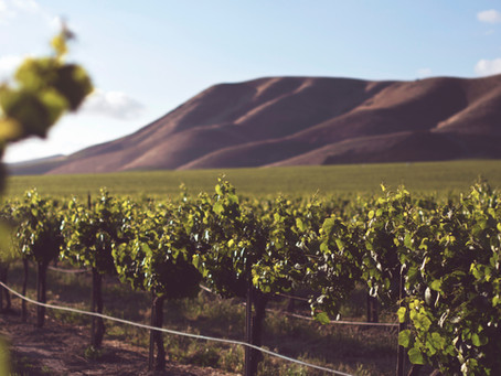 Terroir Wine Guide - Wine Regions 101