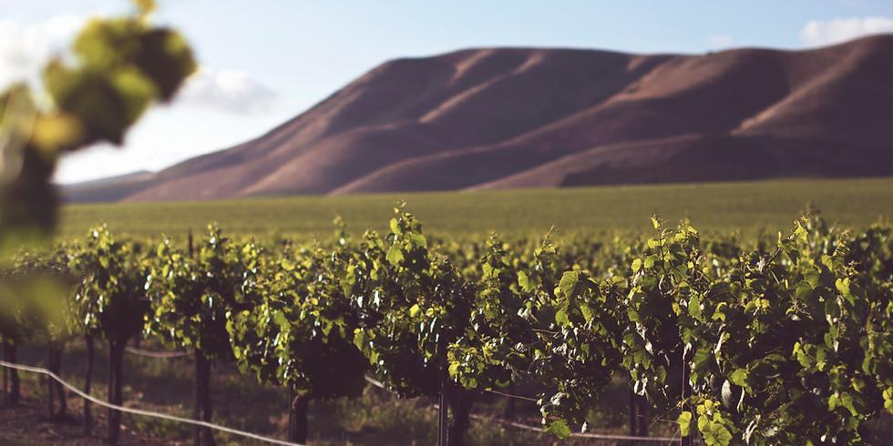 Online Wine Tasting - New Zealand