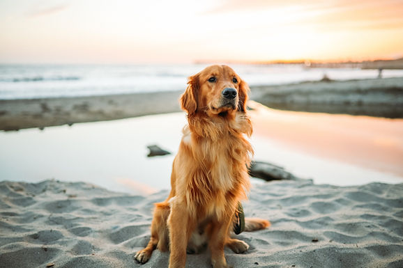 7 Tips To Keep Your Dog Healthy