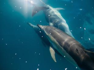 [Angel Dolphins of Atlantis/亞特蘭提斯天使海豚課]