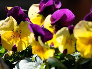 21 Easiest Flowers for Beginners
