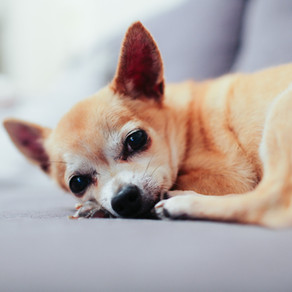 Things Your Senior Dog Would Like to Tell You