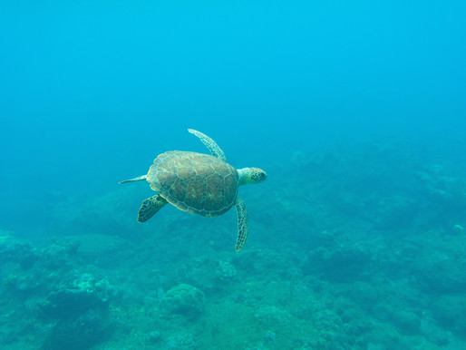 Warm Caribbean Waters – Dive In